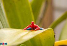 Spider-Man In the Garden