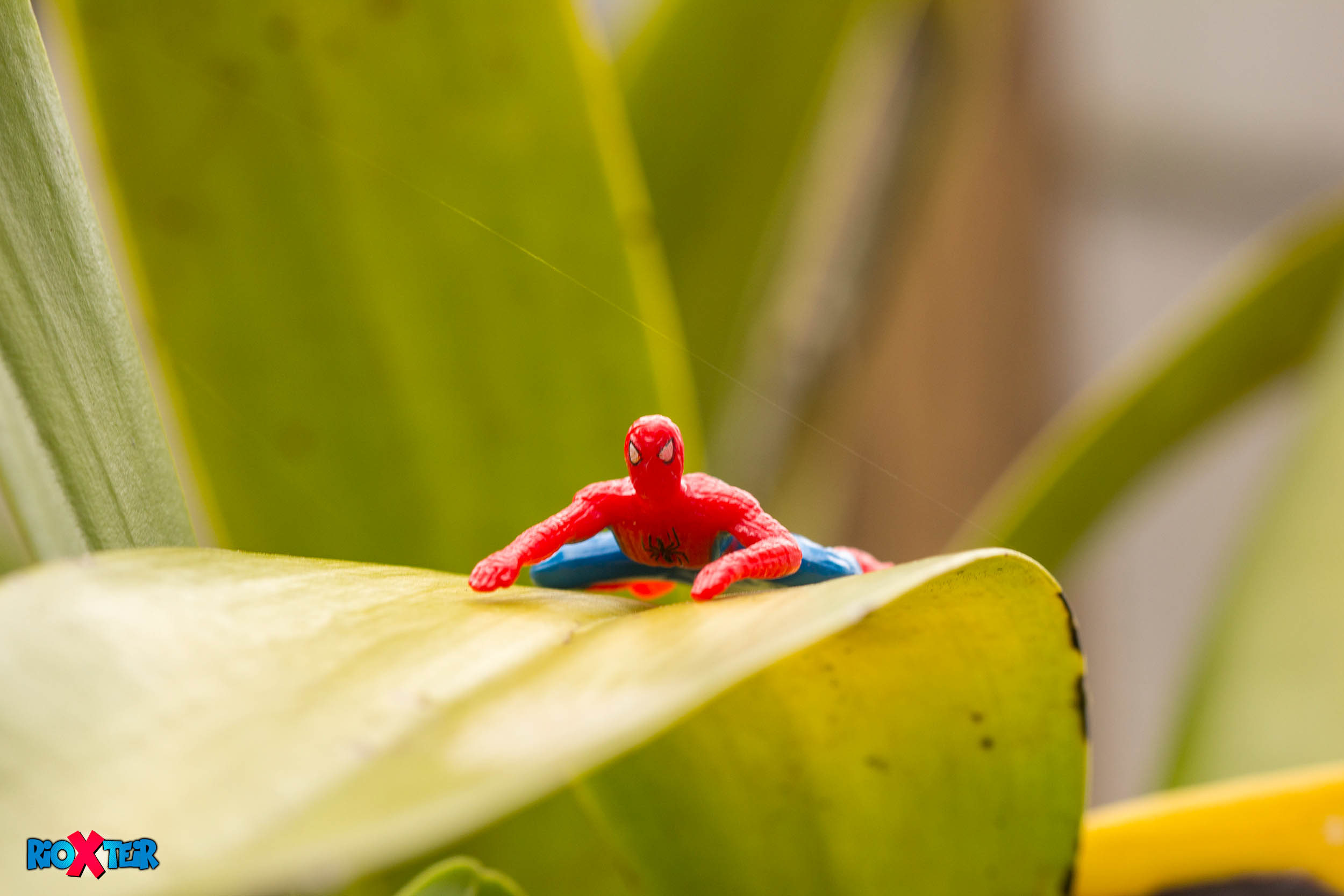 Spider-Man In the Garden